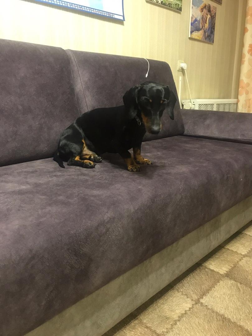Очень довольна новым диваном от Нико